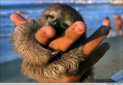 Sloth in hand