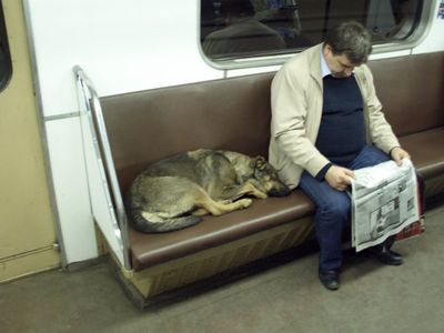 Moscow dog6