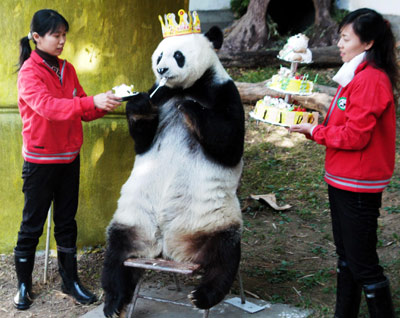 Pics Of Pandas. Is pandas who love to party.