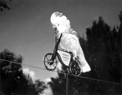 Cockatoo on a bicycle