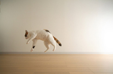 Flying_kitty_1
